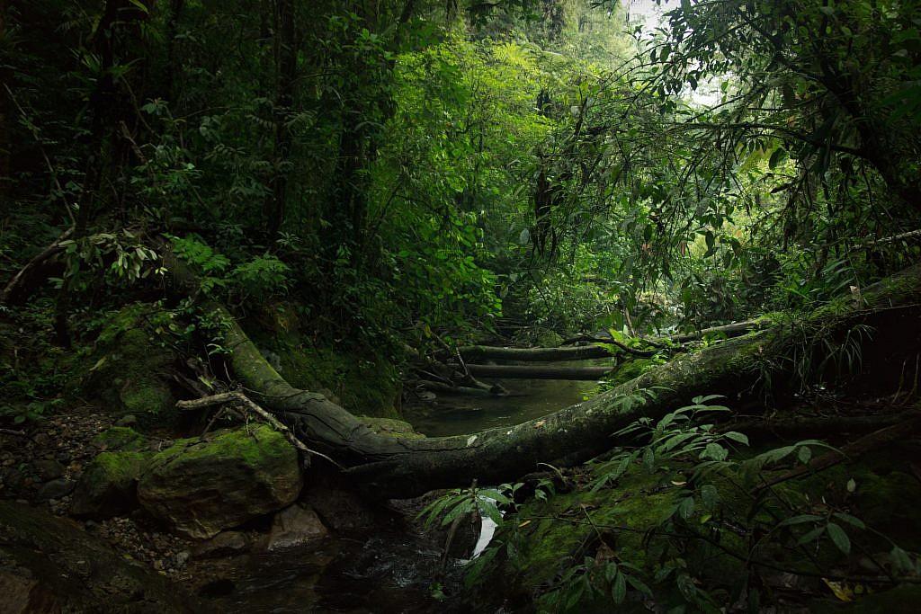 La jungle de Sumatra (en Indonésie), une forêt immensément riche en biodiversité qui a de quoi émerveiller. Elle fait partie des lieux que nous devons protéger. Ame-Photographe-Avignon-PACA-Gard-Naturel-Mariage-Photo-Paysage-Jungle Sumatra